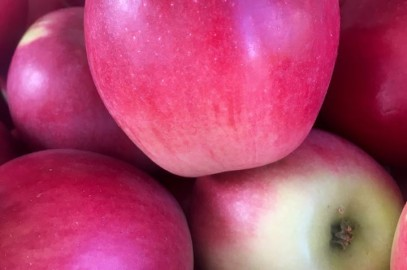 King David apples from Filaree Farms are HERE!